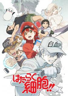 Hataraku Saibou 2nd Season