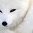 White___Fox