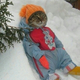 Cherry Retard Cat